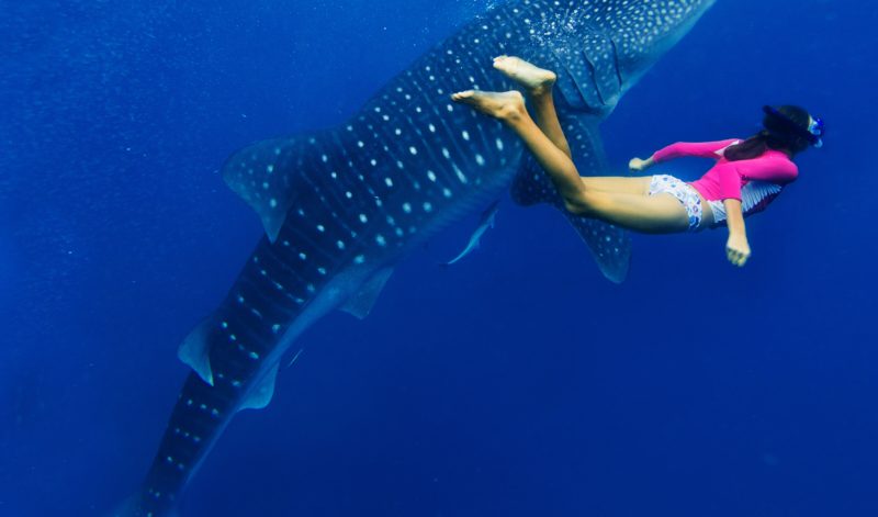 whalesharks-kenya-diving-dianibeach-kitemotion