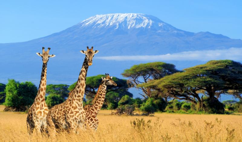 safari-kenya-africa-kitemotion-kitesurfing