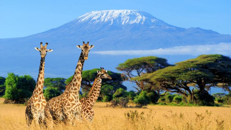 kenia safari afryka kitemotion kitesurfing